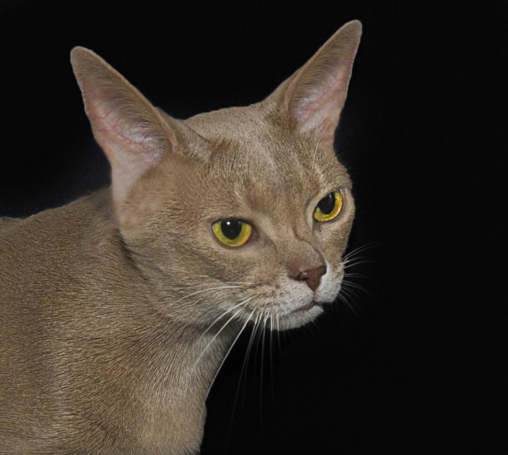 Katte portræt